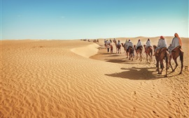 Preview wallpaper Desert, camels, tourism