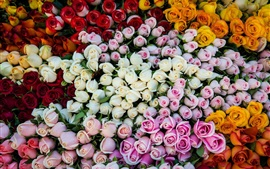 Preview wallpaper Different colors roses, pink, white, yellow, orange, red