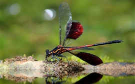 Preview wallpaper Dragonfly close-up, insect photography