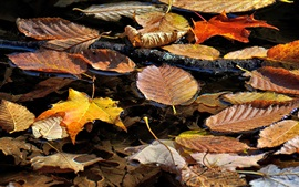 Dry leaves float on water, autumn