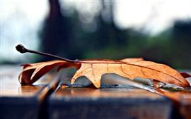 Сухой кленовый лист крупным планом