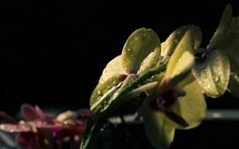 Flores, costas, vista, água, gotas