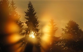 Preview wallpaper Forest, sun rays, morning, fog
