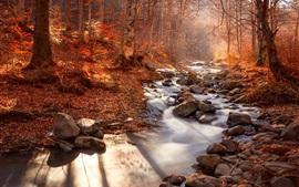 Bosque, árboles, arroyo, piedras