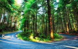 Preview wallpaper Forest, trees, road, light, Oregon, USA