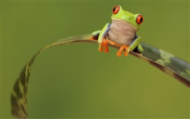 Frog, leaf, green background