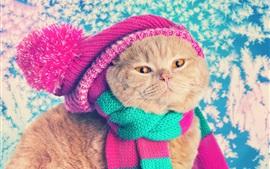 壁紙のプレビュー 面白い猫、帽子、スカーフ