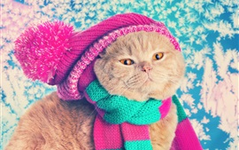 Gato divertido, sombrero, bufanda