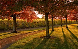 Preview wallpaper Garden, footpath, trees, grass, autumn, sunshine