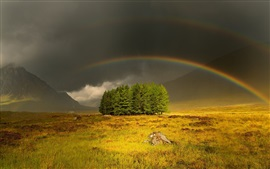 Preview wallpaper Gloomy and cloudy sky, grass, trees, rainbow
