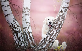 Preview wallpaper Golden Retriever and tree