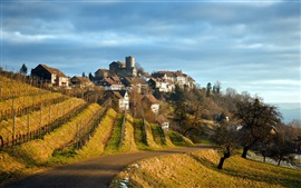 Preview wallpaper Grapes plantations, road, houses, village