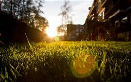 Aperçu fond d'écran Herbe, rayons du soleil, éblouissement