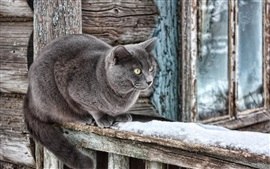 Preview wallpaper Gray cat, hut, snow, winter
