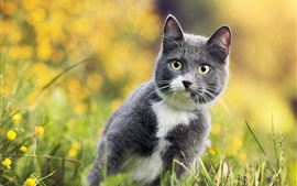 Preview wallpaper Gray cat in the grass look at you