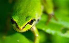 Preview wallpaper Green frog eyes, face, blurry