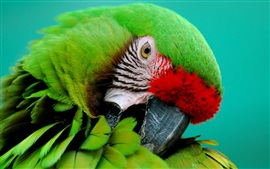 Preview wallpaper Green parrot close-up, beak