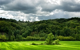 Italie, champs verts, collines, herbe, champs, arbres