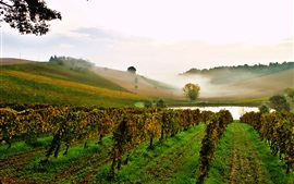 Italy, vineyard, pond, slope, fog