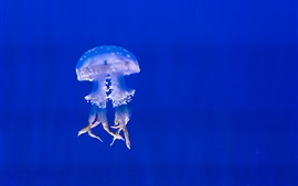 Jellyfish at underwater, tentacles, blue sea