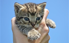 Preview wallpaper Kitten in hand