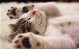 Preview wallpaper Kitten sleep in dream