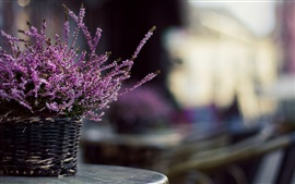 Preview wallpaper Lavender flowers, basket, blurry background