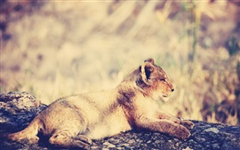 Preview wallpaper Lion cub rest