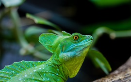 Preview wallpaper Lizard, reptile, green, head close-up