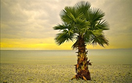 Одинокая пальма, пляж, камни
