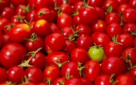 Many red little tomatoes, one green