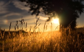 Morning, grass, sunlight, sunrise