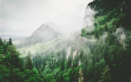 Mountains, trees, slope, fog, morning