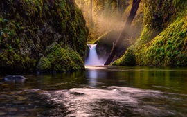 Nature, forest, trees, waterfall, creek, moss