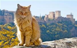 미리보기 배경 화면 오렌지 고양이, 앉아
