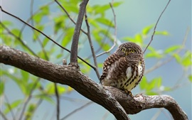 Preview wallpaper Owl standing on tree, bokeh