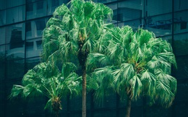 Palm trees, green leaves, city