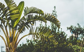 Preview wallpaper Palm trees, leaves