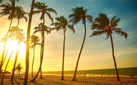 Palm trees, sea, beach, sunset
