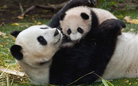 Preview wallpaper Panda and cub, playful