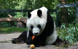 Panda, sentar, comer, alimento