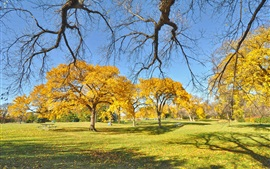 Park, trees, autumn, yellow leaves, grass