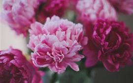 Flores de peônias vermelhas e cor-de-rosa