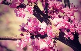 Pink flowers, tree, twigs, spring