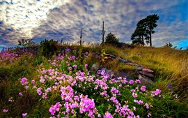 Preview wallpaper Pink wildflowers, grass, clouds, dusk