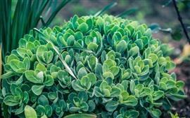 Крупный план растения, зеленые листья