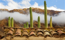 Preview wallpaper Plants cacti, rooftops, clouds, fog