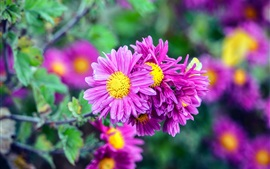 Preview wallpaper Purple flowers blooms, spring