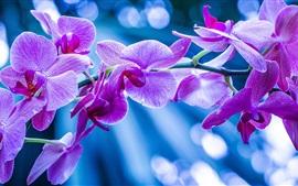 Aperçu fond d'écran Fleurs violettes, orchidées