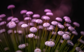Flores púrpuras, tallo, fondo borroso